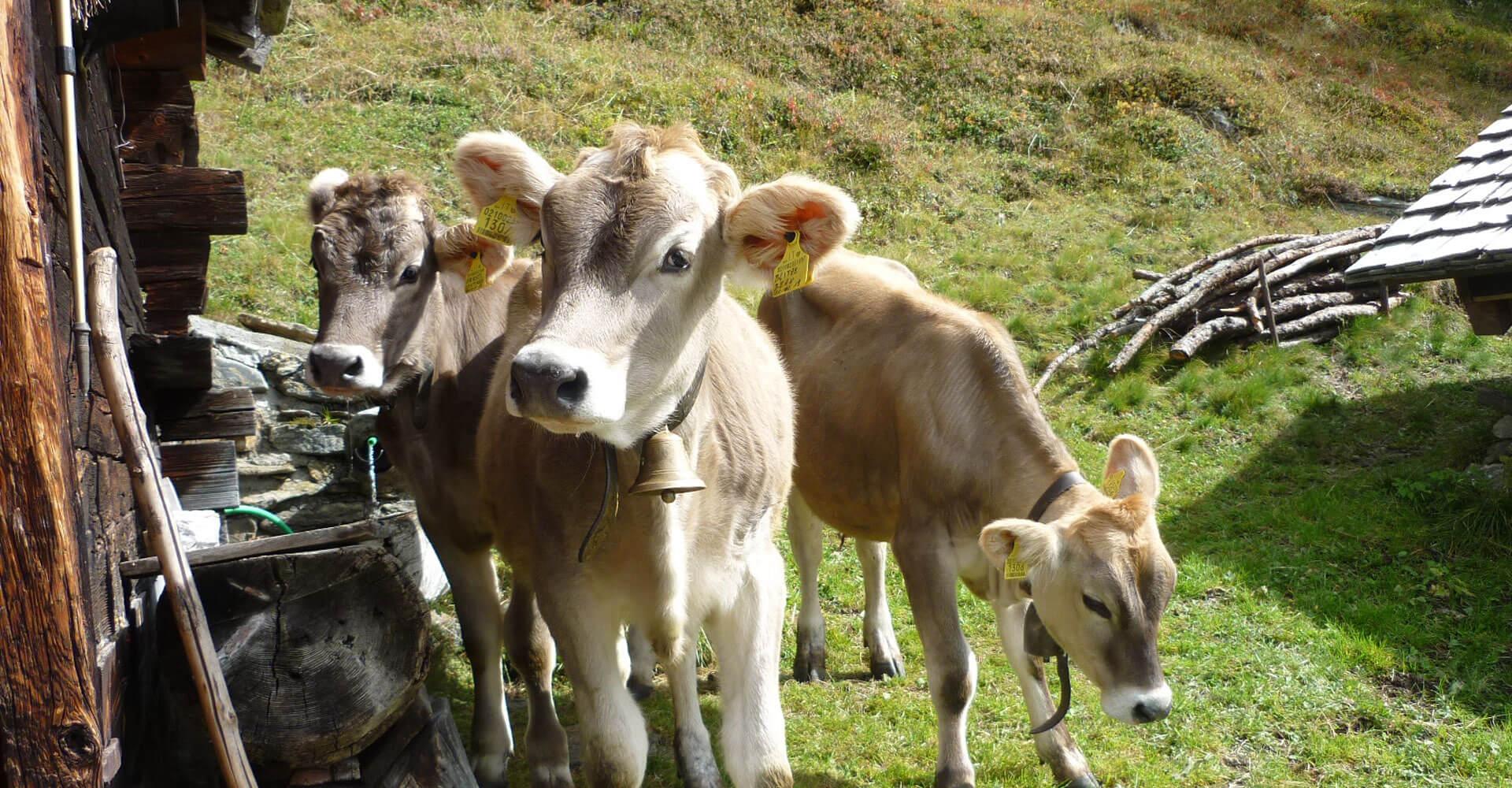 Urlaub auf dem Bauernhof in Terenten - Pustertal / Südtirol
